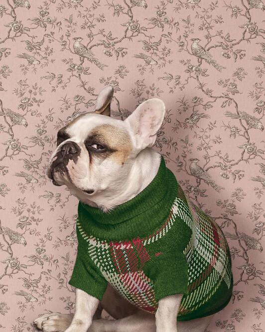 Tartan patterned dog sweater - Peppermint/crocus