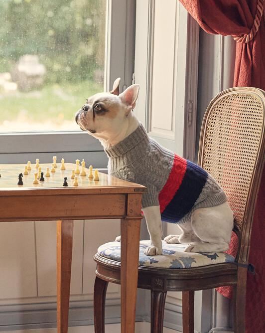 Pull canin à torsades et côtes rayures placées - Flanelle